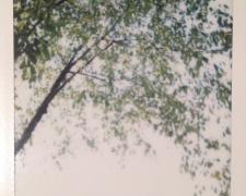 20141012-namsan_1-polaroid